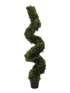 EUROPALMS Boxwood spiral