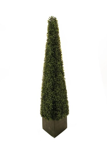 EUROPALMS Boxwood pyramid, 136cm